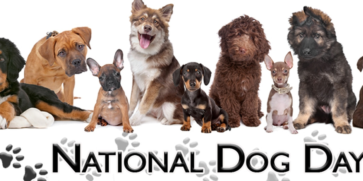 Friday is National Dog Day!