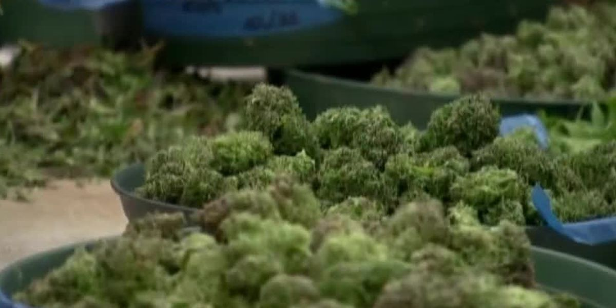 SC Medical Marijuana bill to push FDA