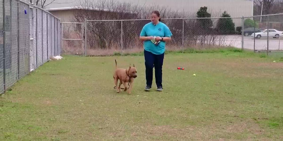 Girl Scout dog trainer