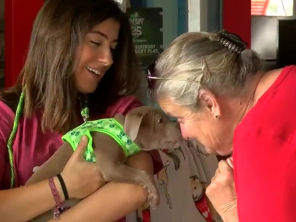 Valentine's Day 'Lunch of Love' held to benefit Grand Strand Humane Society