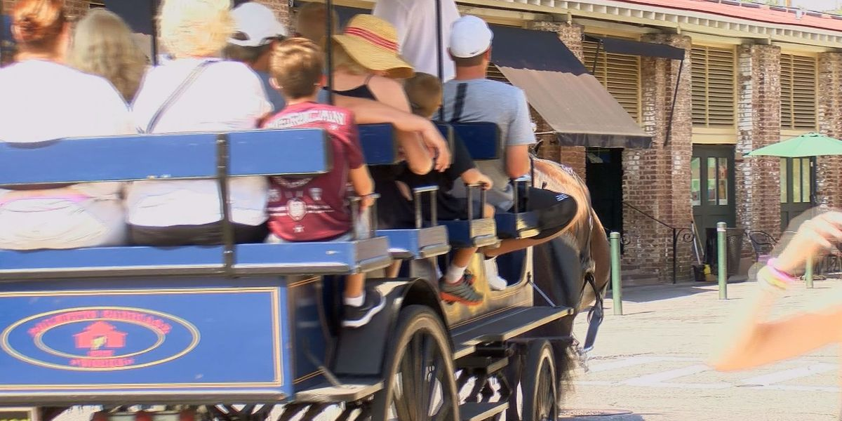 Charleston carriage horses taken off streets due to heat for third day in a row