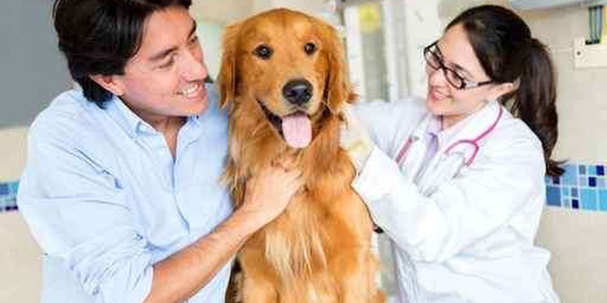 Low-cost rabies vaccinations for pets start soon in SC