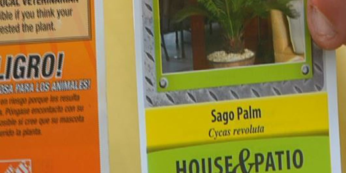 Toxic, lethal Sago Palm nearly kills second family pet in a year