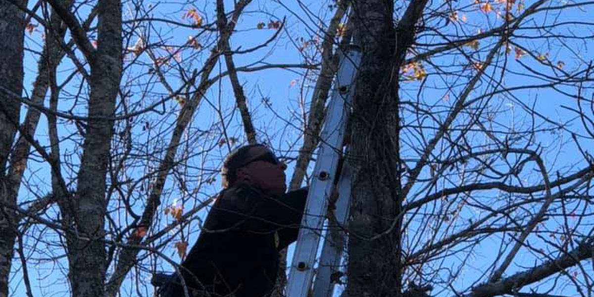After days in a tree, cat rescued by Pee Dee crews