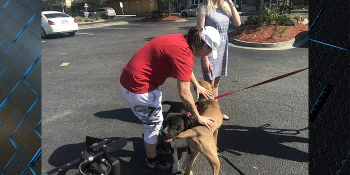Couple reunited with dogs after truck was stolen with pets inside