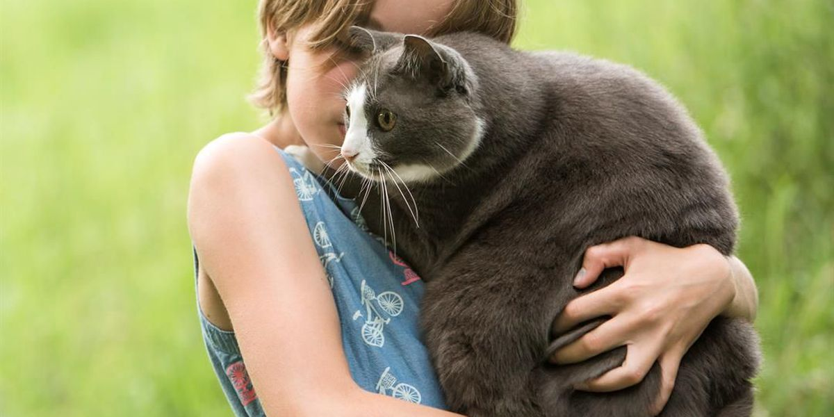 Unconditional love is as close as your nearest shelter: How to choose and care for your new kitty