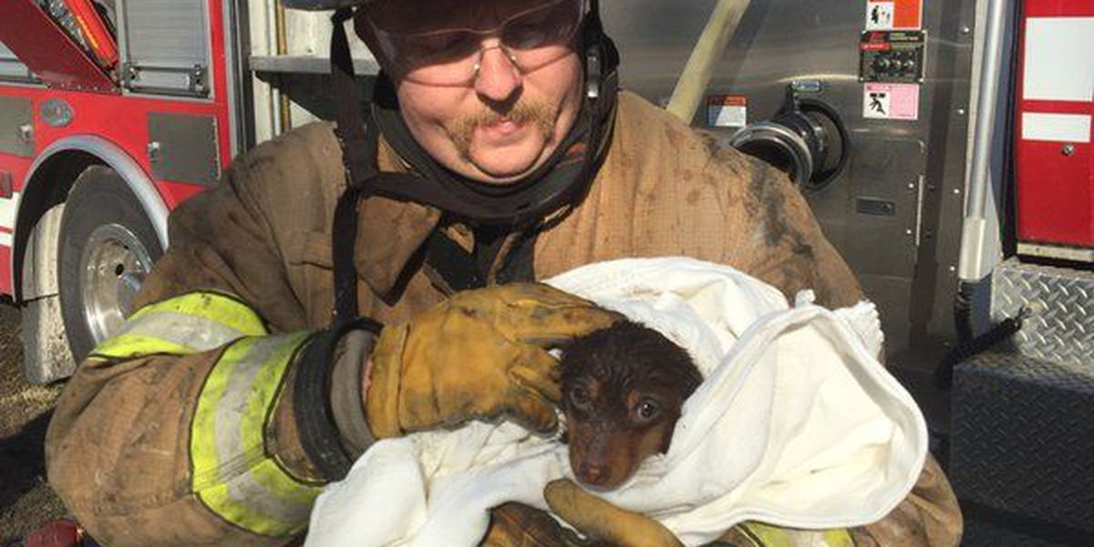 Horry County Fire crews rescue animals from house fire