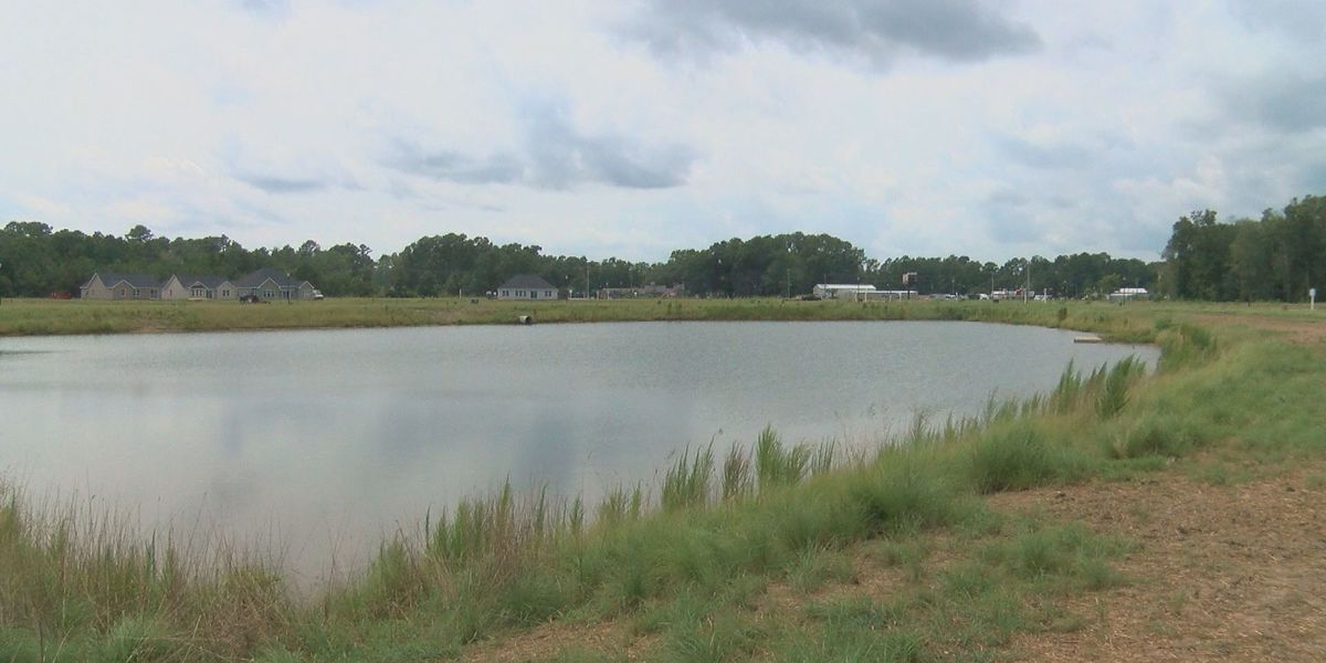 Investigation underway after 17 geese shot, killed in new housing development