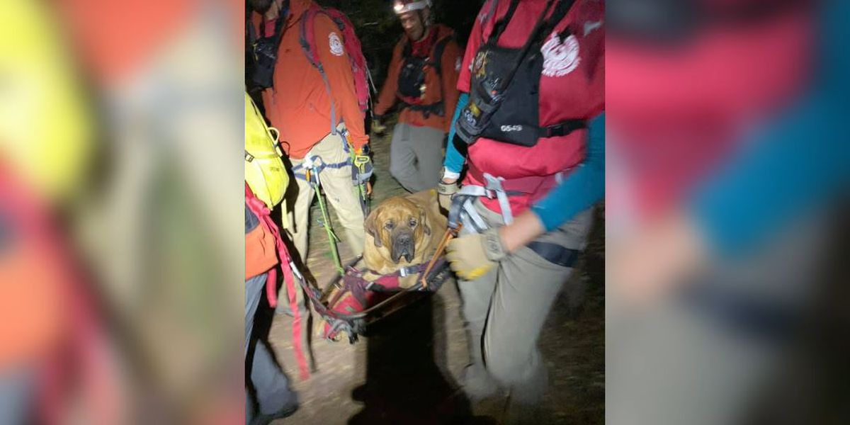 Exhausted dog rescued after lying down, refusing to move on Utah trail
