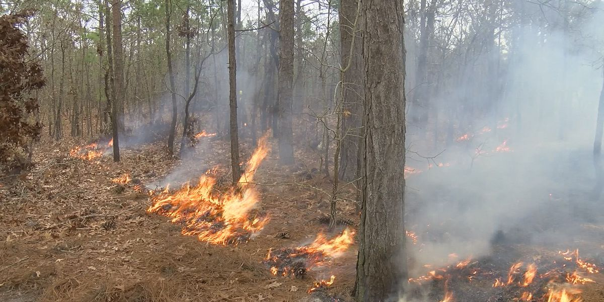 Part of International Drive to close next week for controlled burns