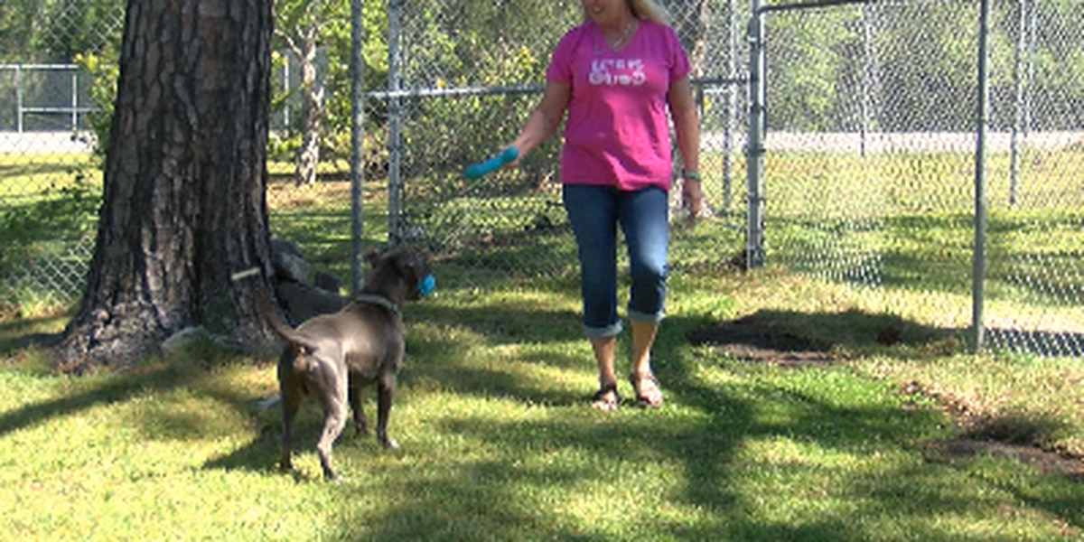 As hurricane season approaches, animal activists weigh in on law that would punish those who leave dogs behind in storms