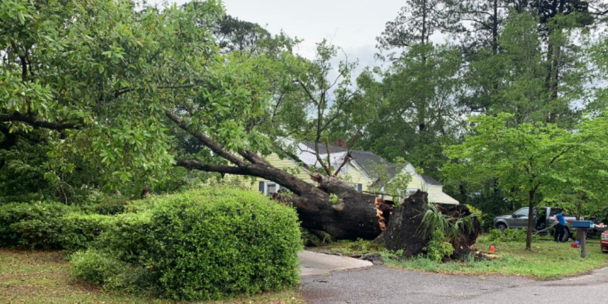 Massive tree crashes down on truck, parts of home in Florence County