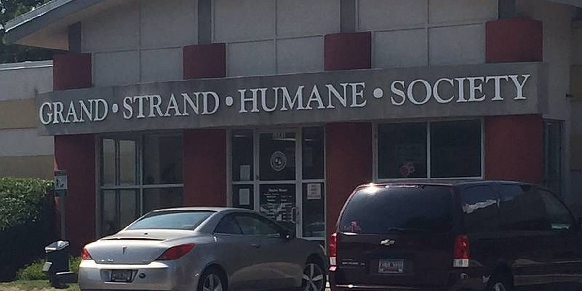 Mix of bleach, urine at Humane Society sends person to hospital