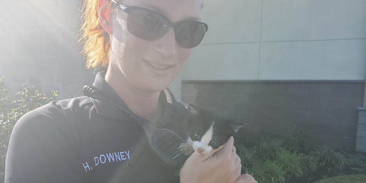 North Myrtle Beach animal control officer rescues kitten from storm drain