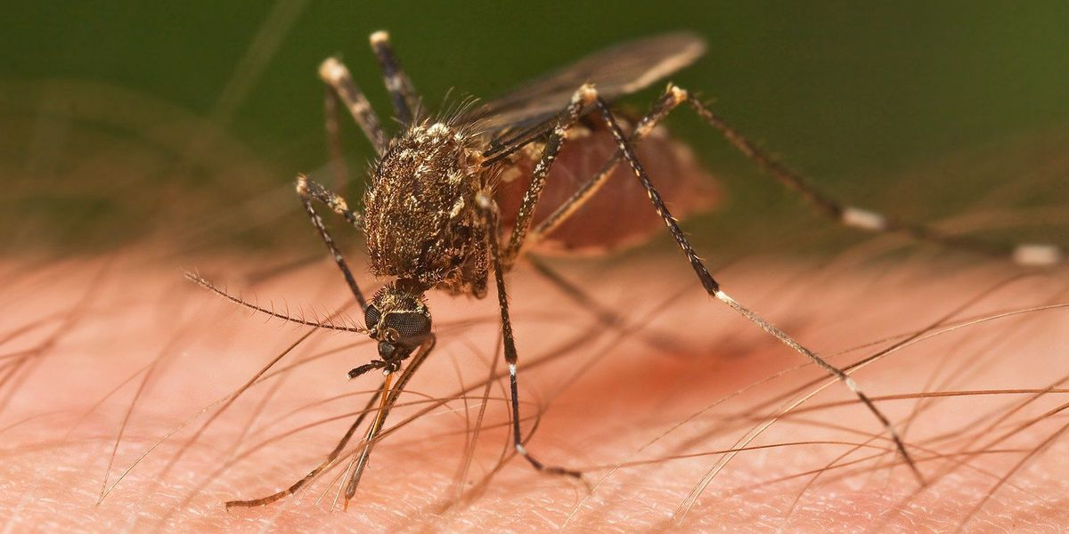 Horry County increases mosquito control budget; prepares for buggy season