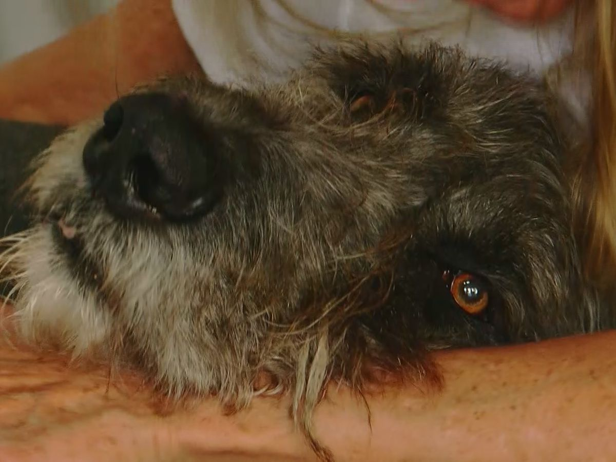 This is Carolina: Good Samaritans turn tragedy around after dog survives hit-and-run
