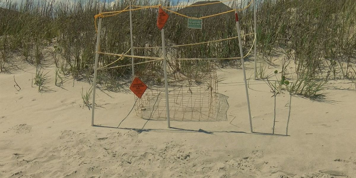 Beach holes causing problems for sea turtles