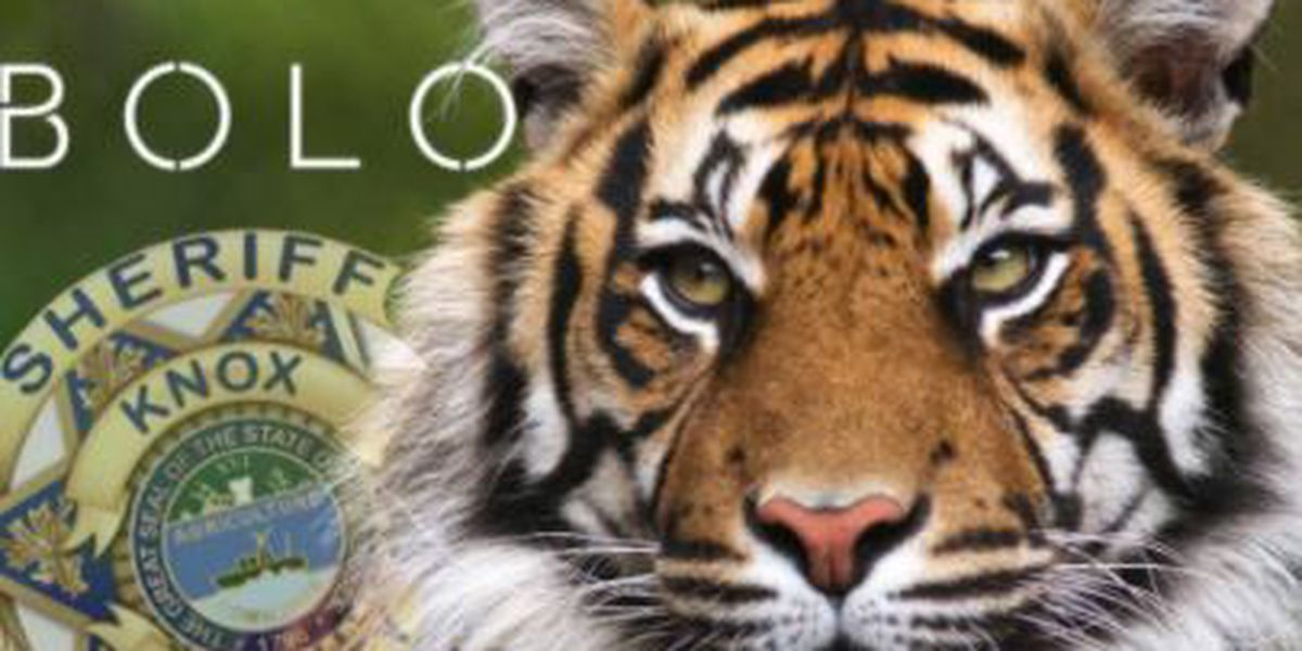 Search underway for tiger spotted in east Tennessee