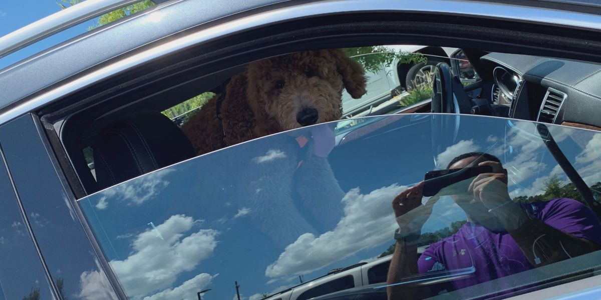 See an animal locked in a hot car? In SC, you can't do much about it