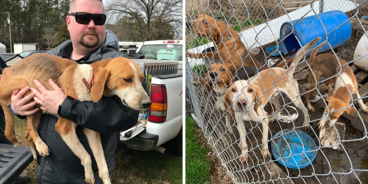 'There is no excuse': Investigators rescue 12 malnourished dogs from Robeson County home