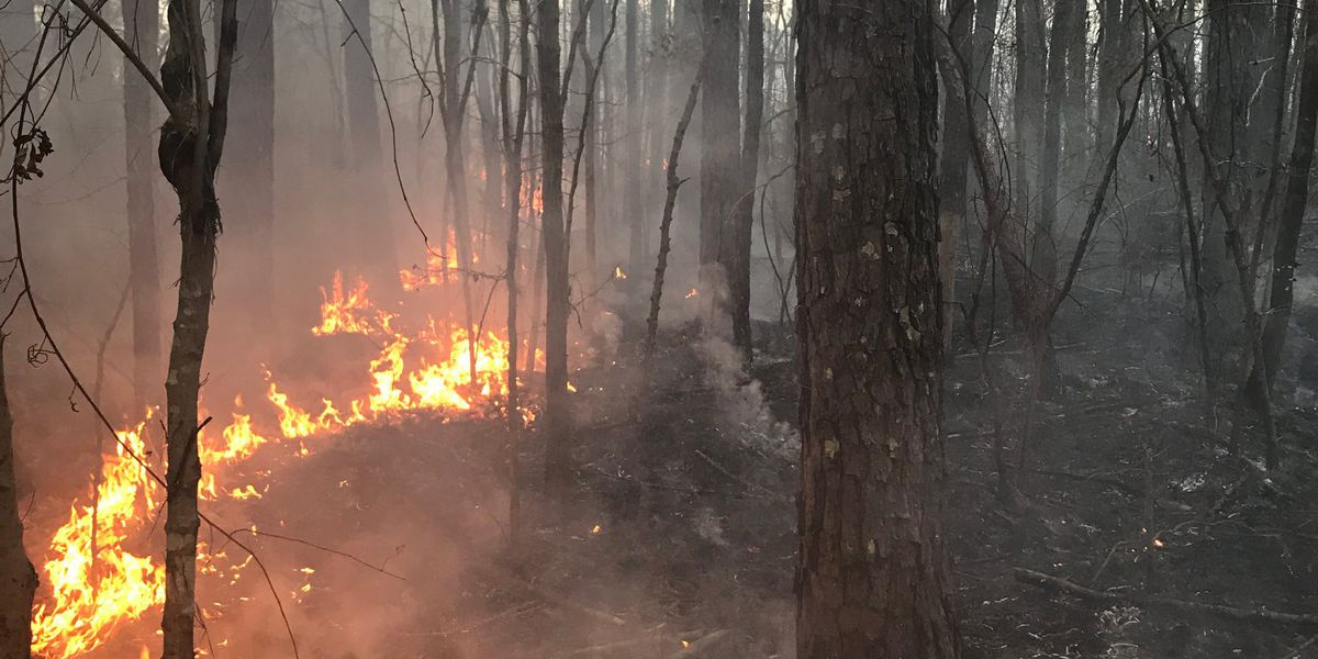 Horry firefighters ask residents to be 'extremely careful' to reduce chances of wildfires