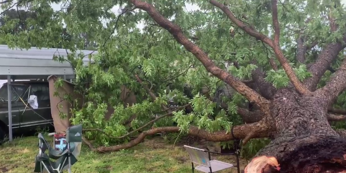 Tree lands on man's camper during severe storms in Darlington County; 1 hurt