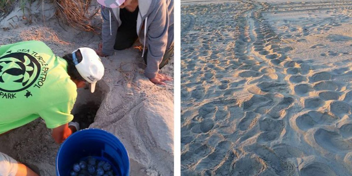 Don't interfere with the sea turtles, Myrtle Beach officials warn