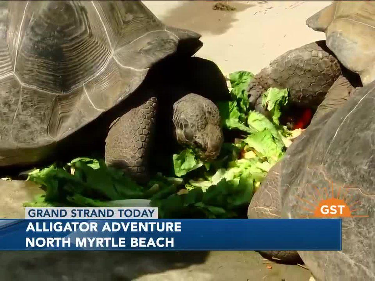 Exploring Alligator Adventure in North Myrtle Beach