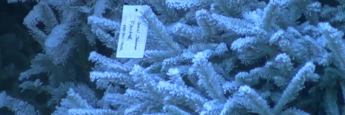 Christmas tree farm sees trees selling faster than ever