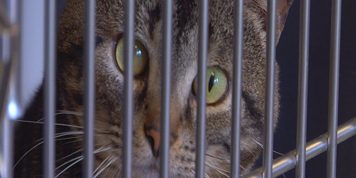Thousands of animals euthanized every year at HCACC