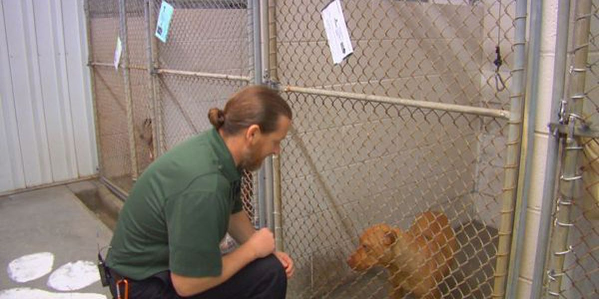 Local animal shelter leaders speak out on dog fighting