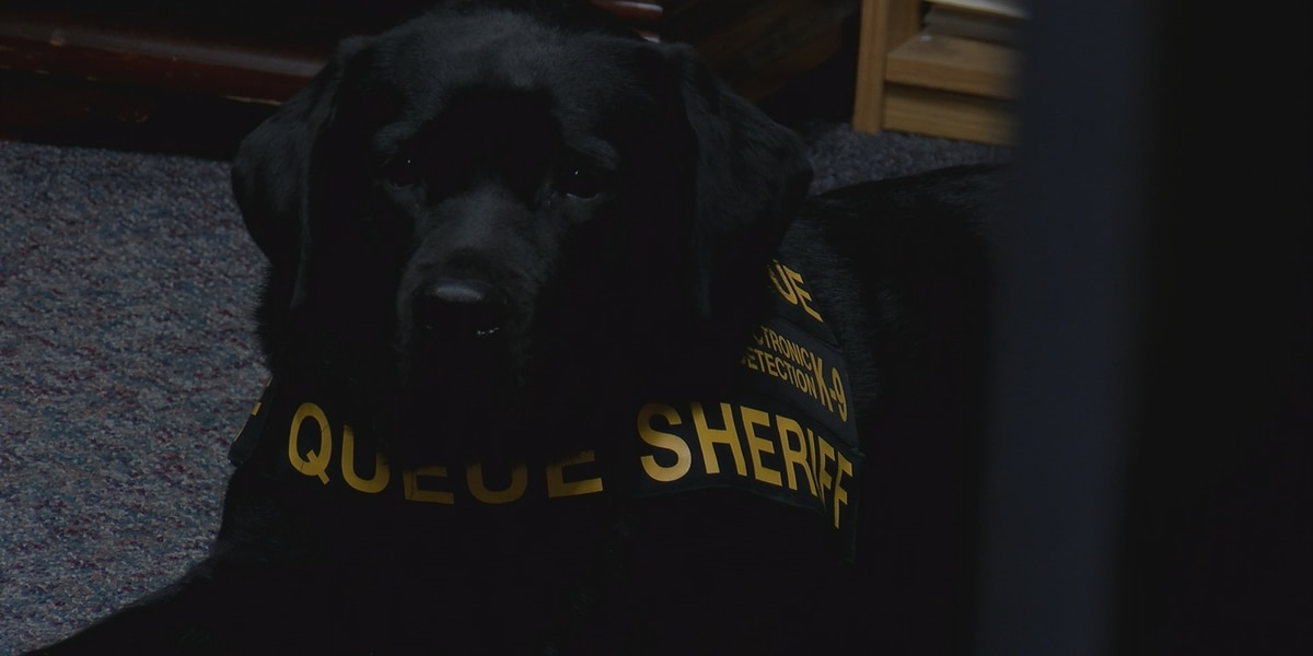 South Carolina's only electronic detection K-9 'sniffing out' crime