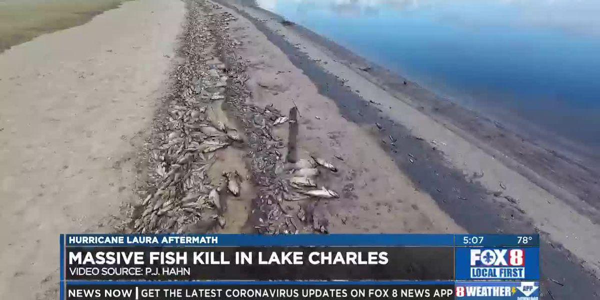 LDWF investigating large fish kill in Lake Charles following Hurricane Laura