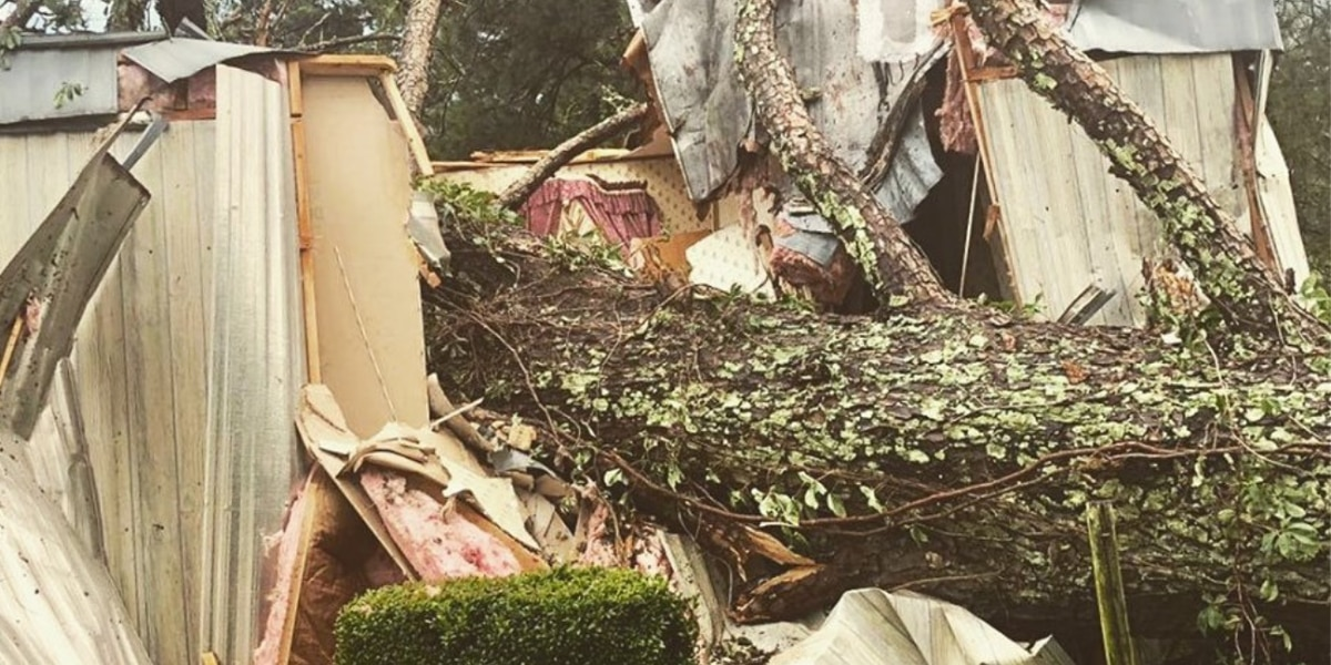 Massive tree falls onto mobile home during storms, elderly woman rescued