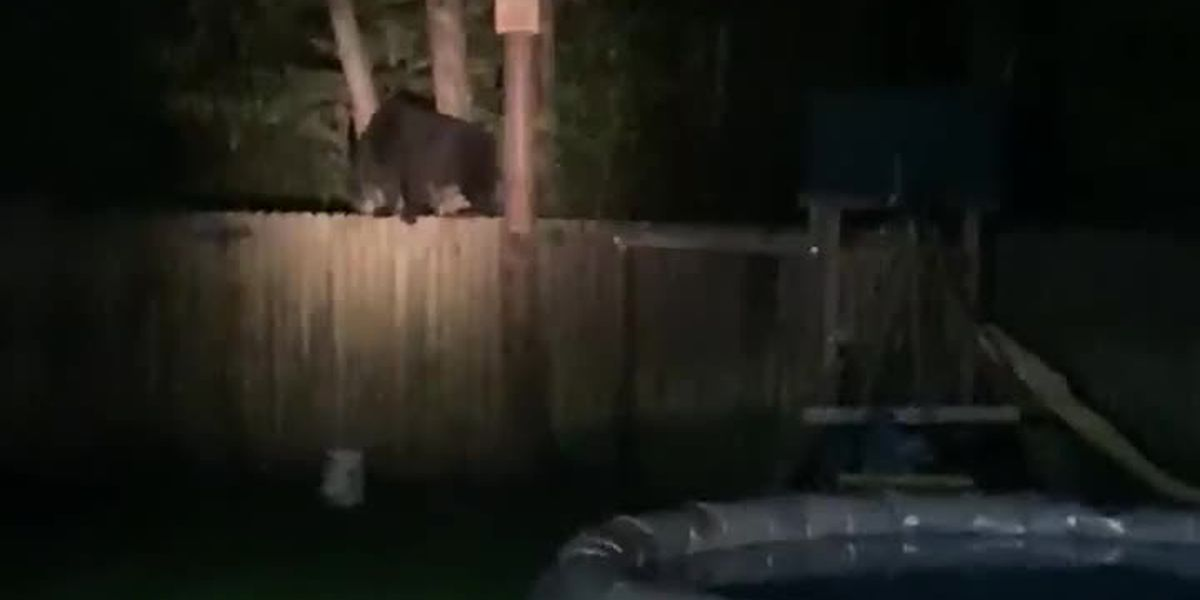 RAW: Bear spotted in Carolina Forest's Southgate neighborhood