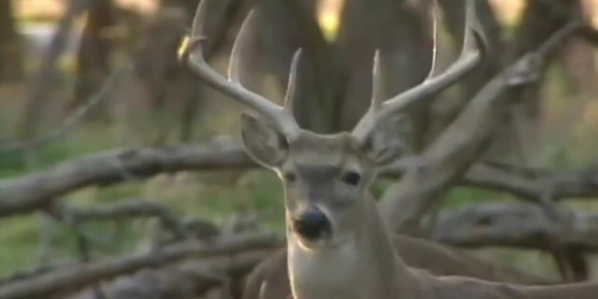 2020 deer season is coming to an end in S.C. during tumultuous year