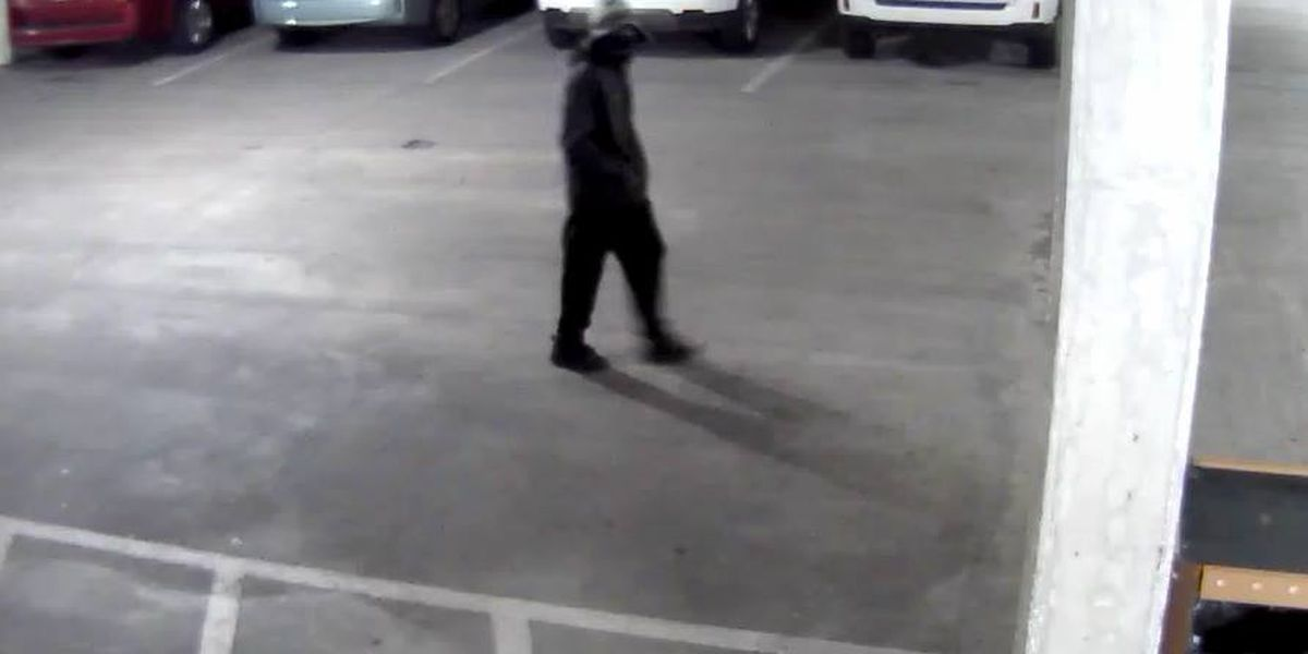 Myrtle Beach Police looking for purse snatching suspect