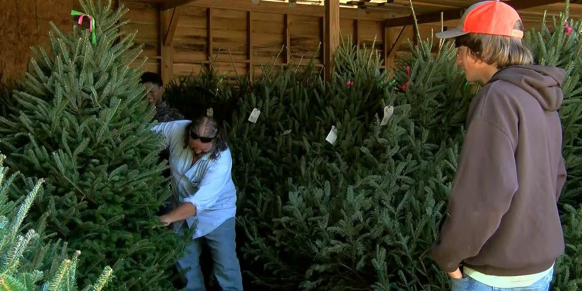 Recent hurricanes and flooding impact local Christmas tree farms