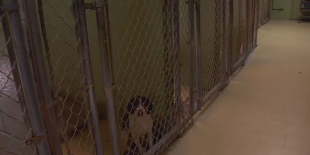 Horry County Animal Care Center works to increase live release rate