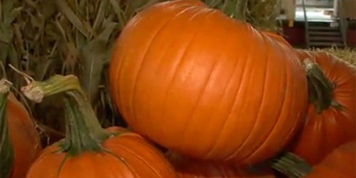 Sex offenders can't give out candy on Halloween in South Carolina