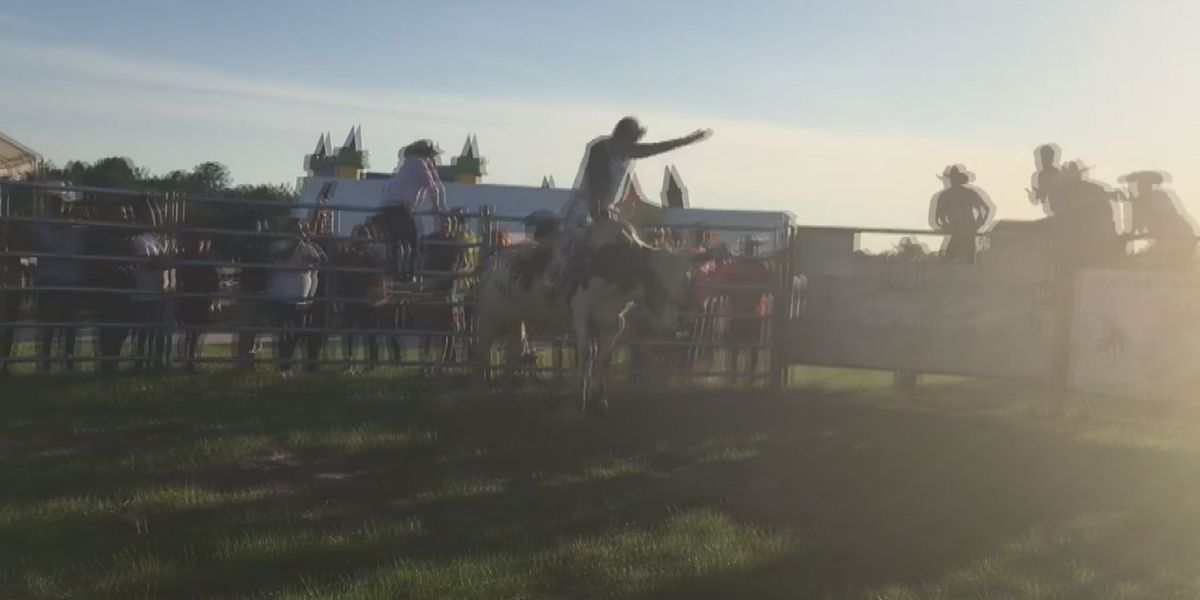 Student Spotlight: Conway High junior reflects on 'crazy' bull riding experience