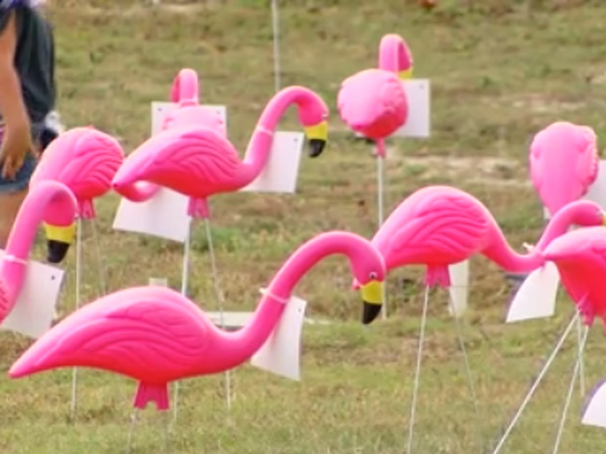 Hundreds of flamingos fill Pee Dee hospital lawn for breast cancer awareness