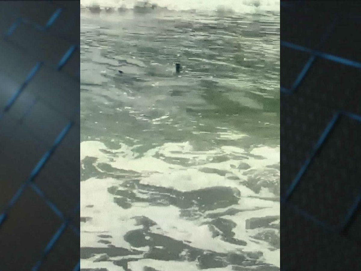VIDEO: Shark spotted close to shore near Garden City Pier