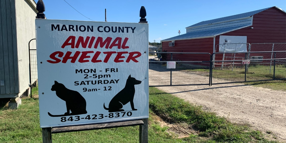 Marion Co. animal shelter director under investigation for alleged embezzlement