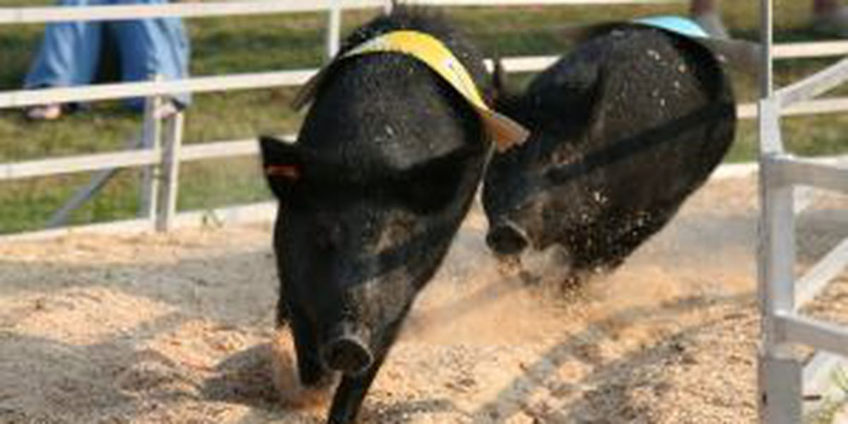 The 2014 Eastern Carolina Agricultural Fair ends today