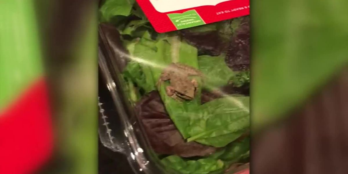 Wis. family finds frog in salad greens