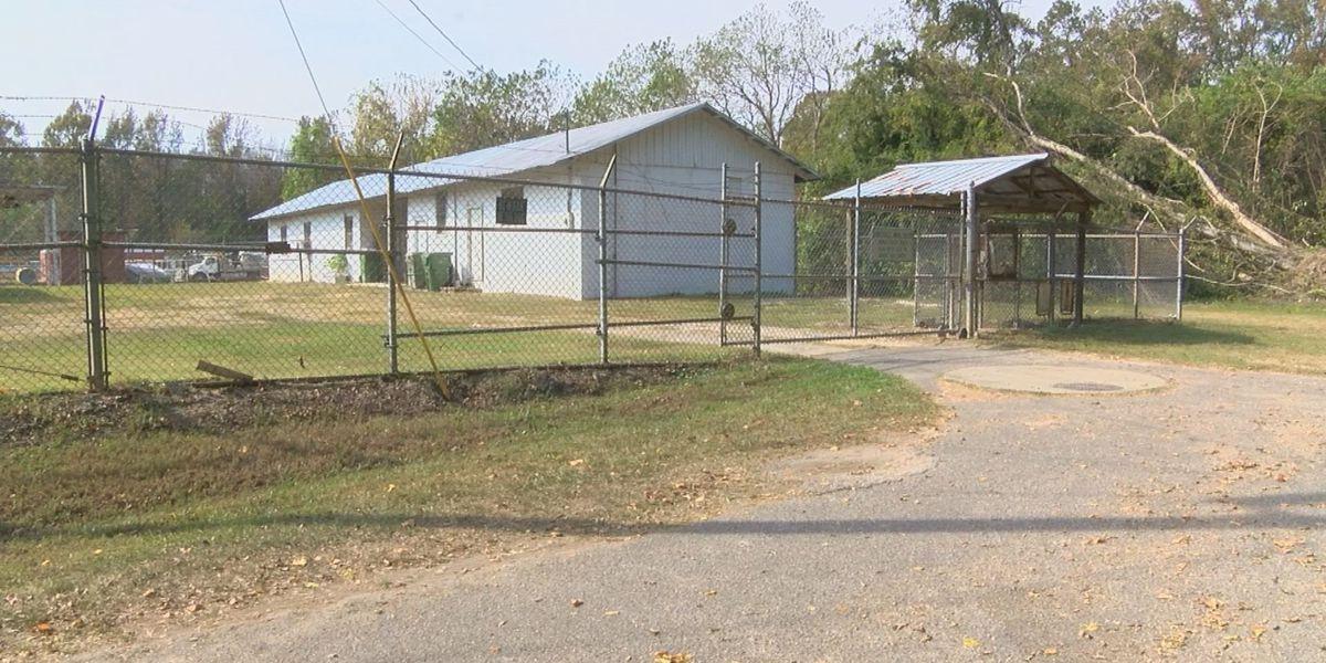 Bennettsville addressing concerns at animal shelter