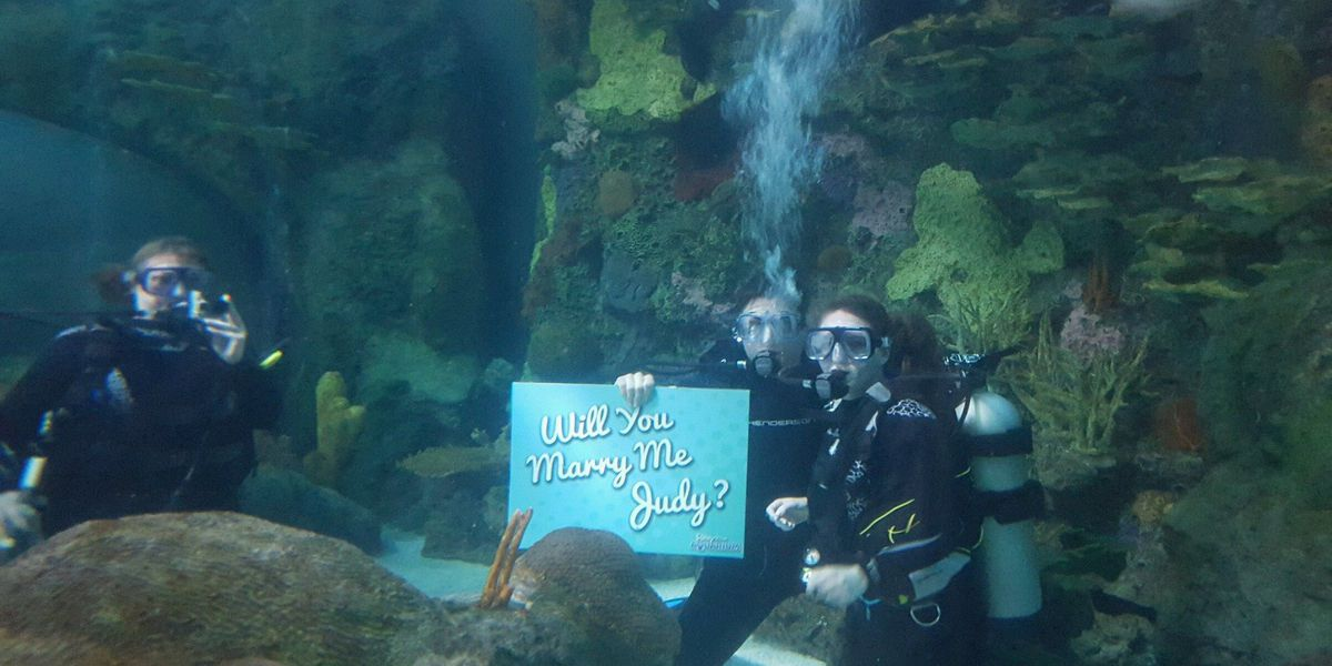 Man proposes to woman in Ripley's aquarium tank