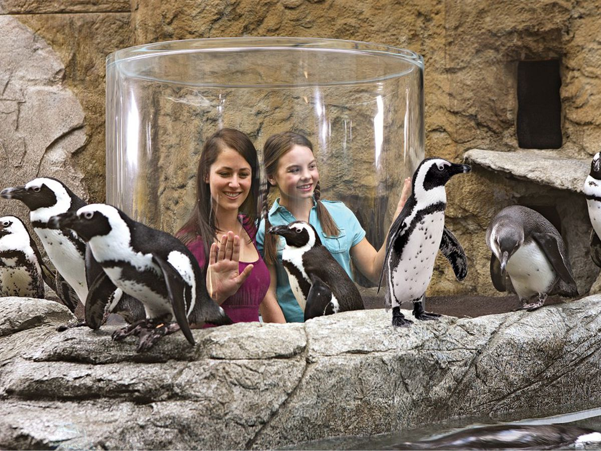Ripley's Aquarium to host inaugural Penguin Dash 5K