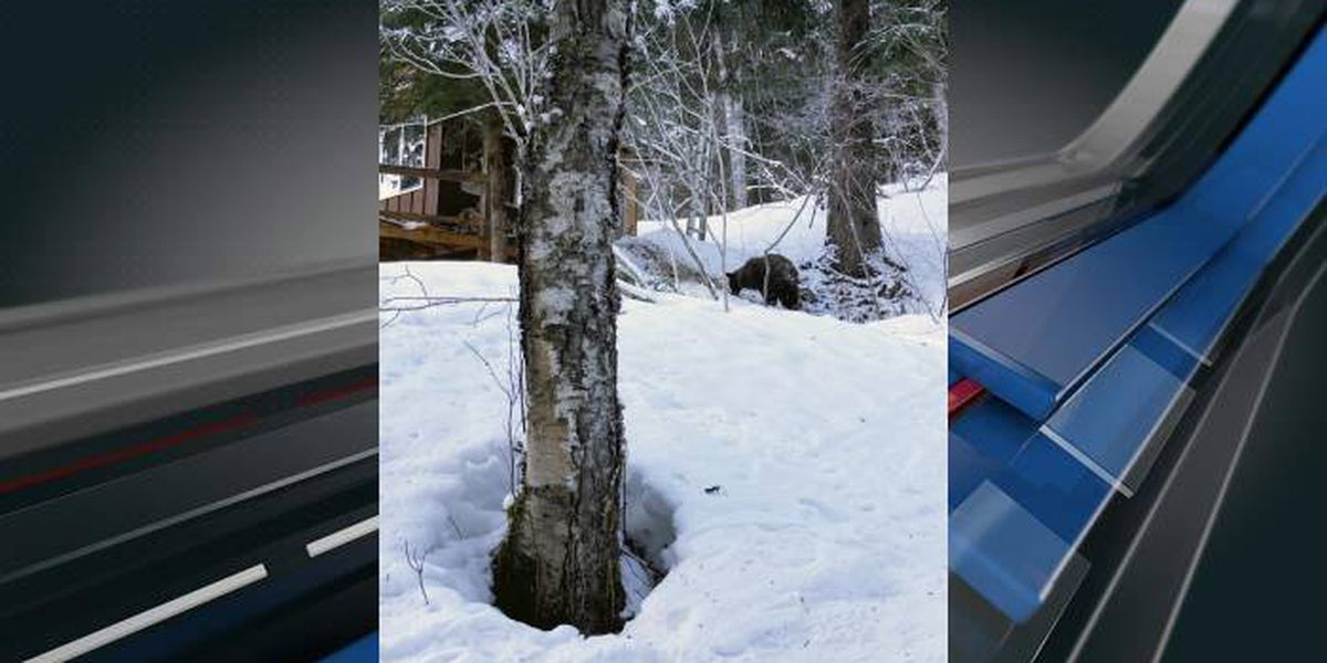 Alaska woman using outhouse attacked by bear, from below
